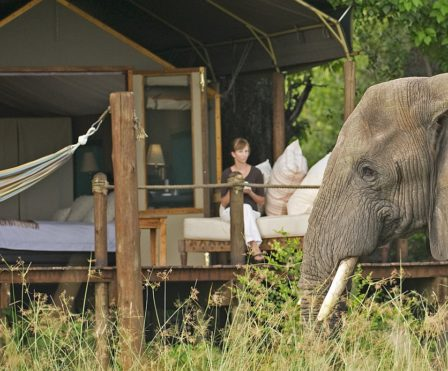 STanleys guest and elephant at tent 2
