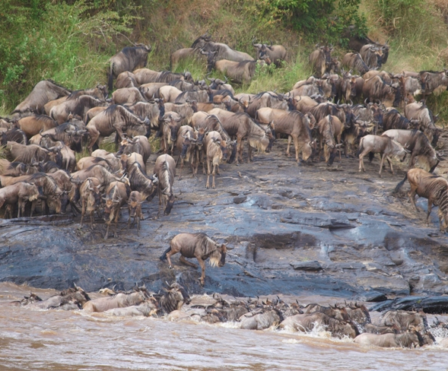 Tanzania - Home to the great migration